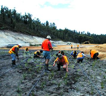 wet lands planting